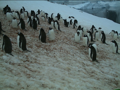 www.penguinwatch.org - Win Quark Expeditions Penguin Watch Competition
