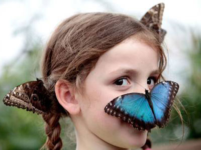 www.timeout.com-london - Join Timeout Sensational Butterflies Sweepstakes
